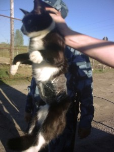Cat detained on illegal mission at Russian prison